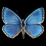 Logo - Tierwelt Österreich
